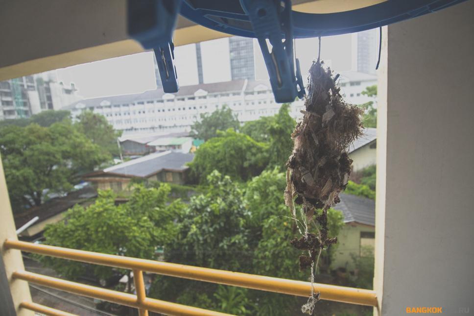 Нектарницы на балконе