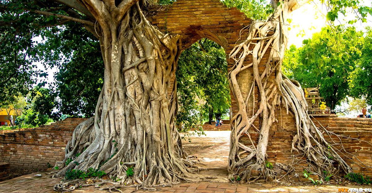 Wat Phra Ngam - ворота времени в Аюттхае. Таиланд