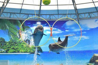 Шоу дельфинов на Пхукете. Билеты онлайн