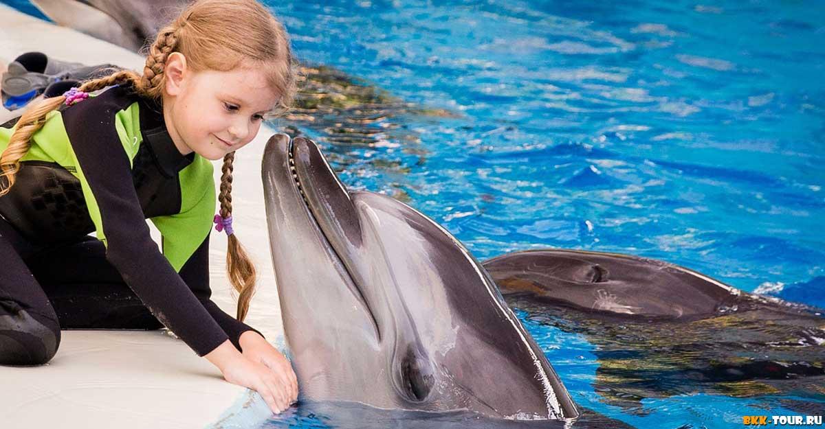 Большой Сочинский дельфинарий ждет гостей