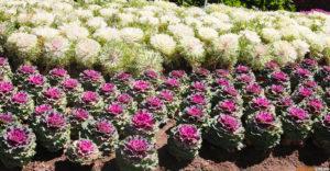 Цветы на площадке у королевских ступ