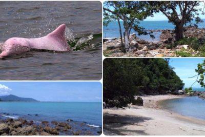 Экспедиция из Пхукета и Бангкока к розовым дельфинам