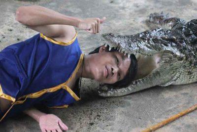 Экскурсия на крокодиловую ферму и в деревню слонов в 35 км от Бангкока на целый день.